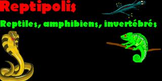 reptipolis Index du Forum
