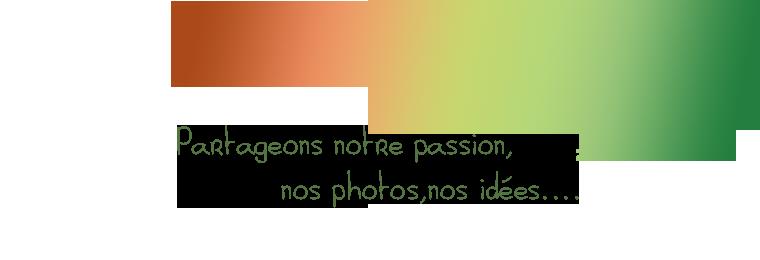 Bellisae Designs Index du Forum