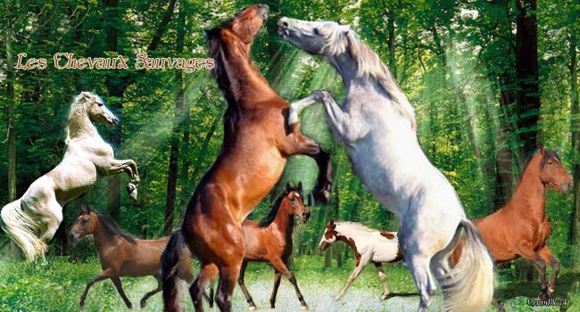 La survie des chevaux sauvage Index du Forum